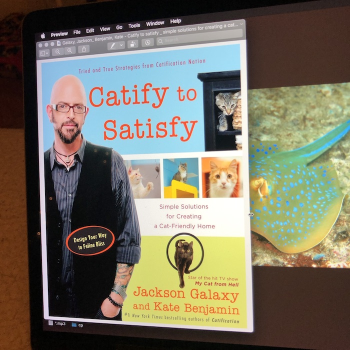 computer screen displaying Jackson Galaxy's book Catify to Satisfy